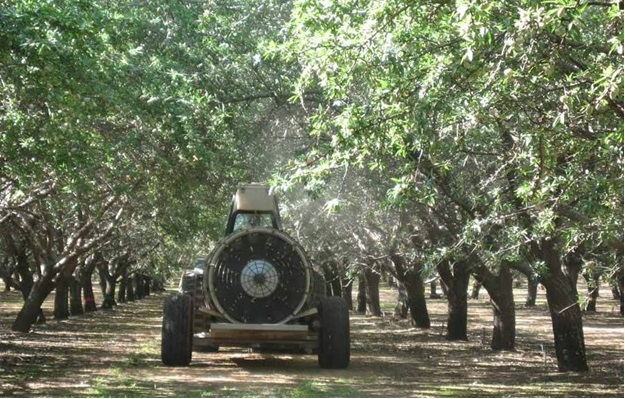 Pruning Can Improve Pest Control The Almond Doctor