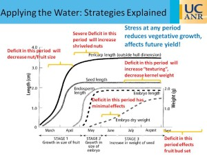 Figure 2: Effects of severe water stress on almond growth at specified points within the growing season.