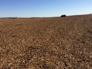Wood chips from a ground orchard spread back across a field.