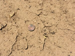 Loss of soil aggregates can lead to a crust, reducing water infiltration rates.