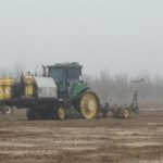 Field fumigation should be considered when replanting almond orchards.