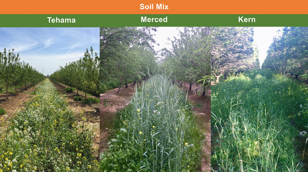 Cover crop research review: How can it help almonds? - The Almond Doctor